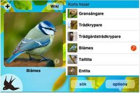 kvitterfåglar
